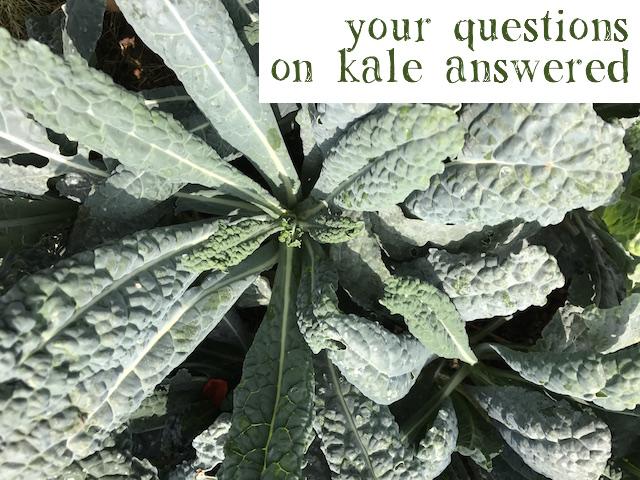 crispy-kale-chips-india