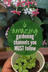 Home Gardening India – 6 brilliant channels for Home and Kitchen Gardeners