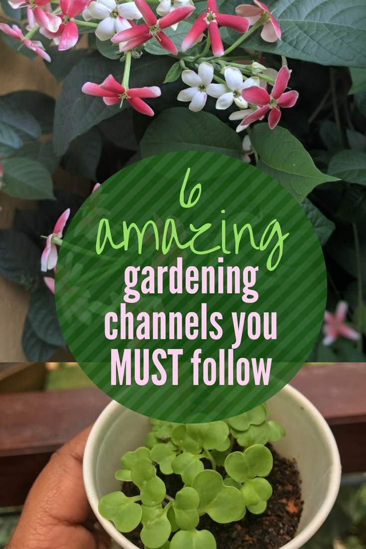 6 Best Home Gardening Youtube Channels From India That You Must Follow