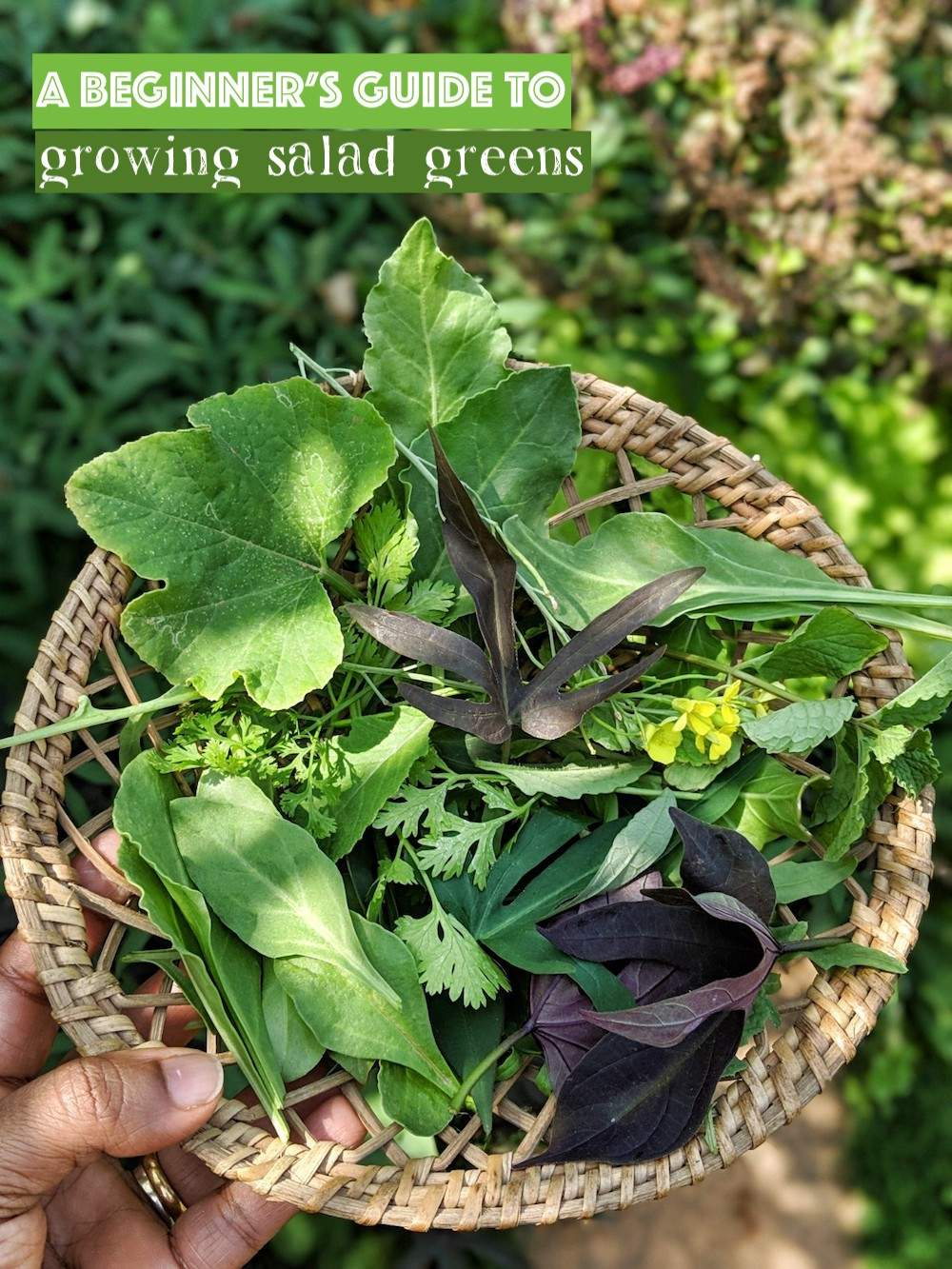 growing-salad-greens